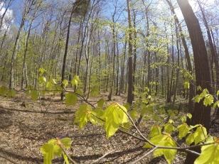 Snabblöpt och bra sikt i den här skogen