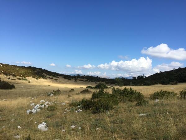 Grässlätter och mer buskiga områden om vart annat när vi passerat toppen och var på väg utför längs åsen.