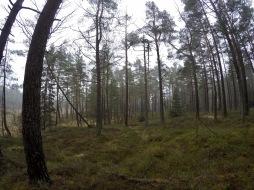 Fint i skogen, även om molnen hängde lågt.