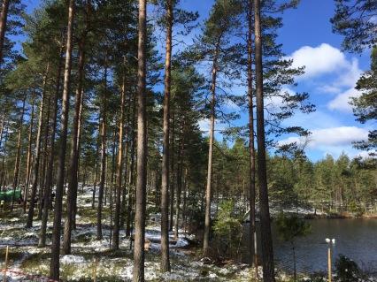 ...och betydligt mindre snö här än längre ut i terrängen.