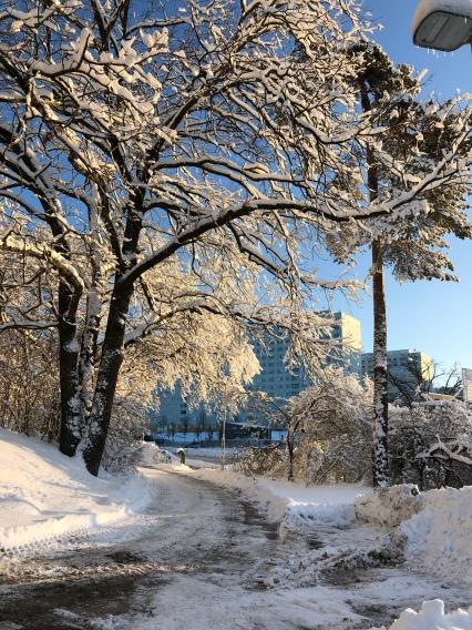 Så fint med snö på träden när solen kikar fram.