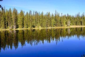 En spegelblank liten skogssjö vid kanten av fjället.